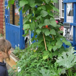 Summer Crop at Sudbourne School