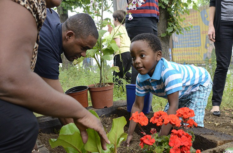 Dads into school planting day at Jubilee School